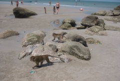 Beach monkeys.