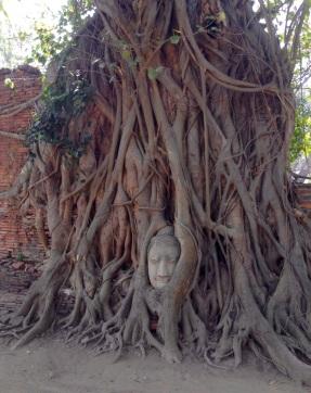 Wat Phra Mahathat-head growing in tree