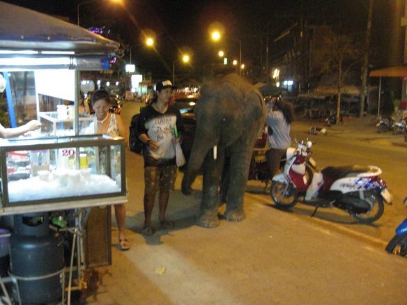 Baby elephant we followed back to our hotel one evening