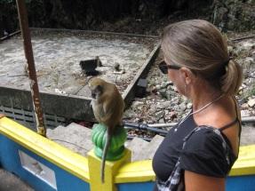 More monkeys