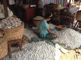 Garlic piles to rival Bob's annual bounty