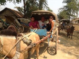 Horse & buggy tour