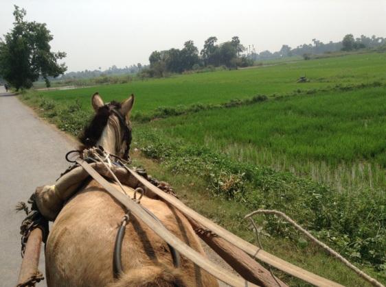 Inwa rice fields
