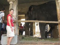 Lakshmi the Virupaksha temple elephant