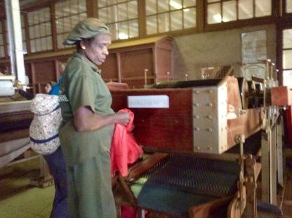 Tea factory worker