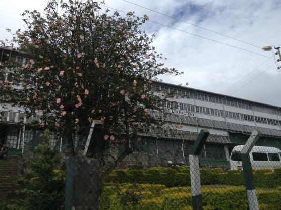 Dambatenna Tea factory