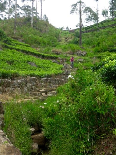 Plantation Trekking