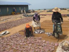 Flipping the dried fish