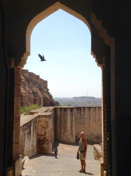 Bird in flight as Bob leaves fort