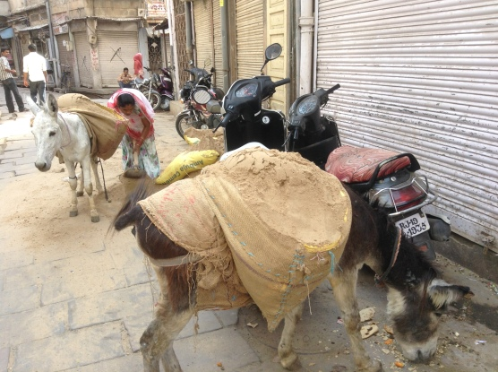 Women & donkeys hauling sand