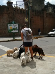 Recoleta dog walker