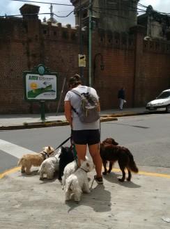 Recoleta dog walker