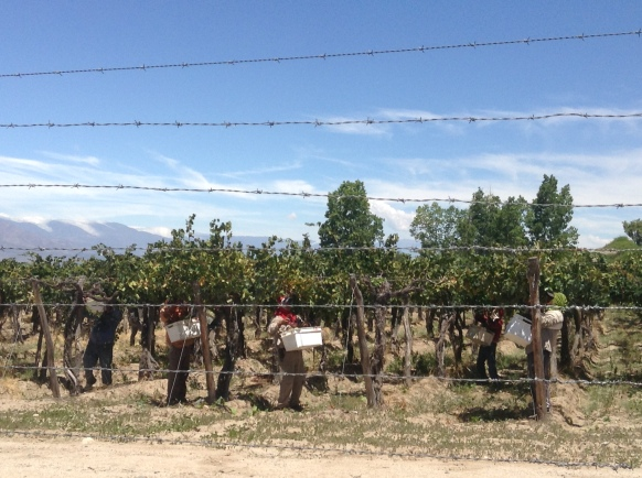 Pickers hard at work