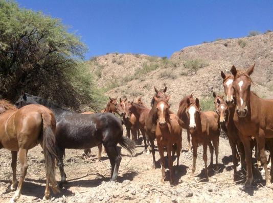 Horse roadblock