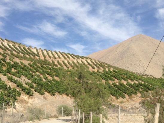 Vertical fruit orchard
